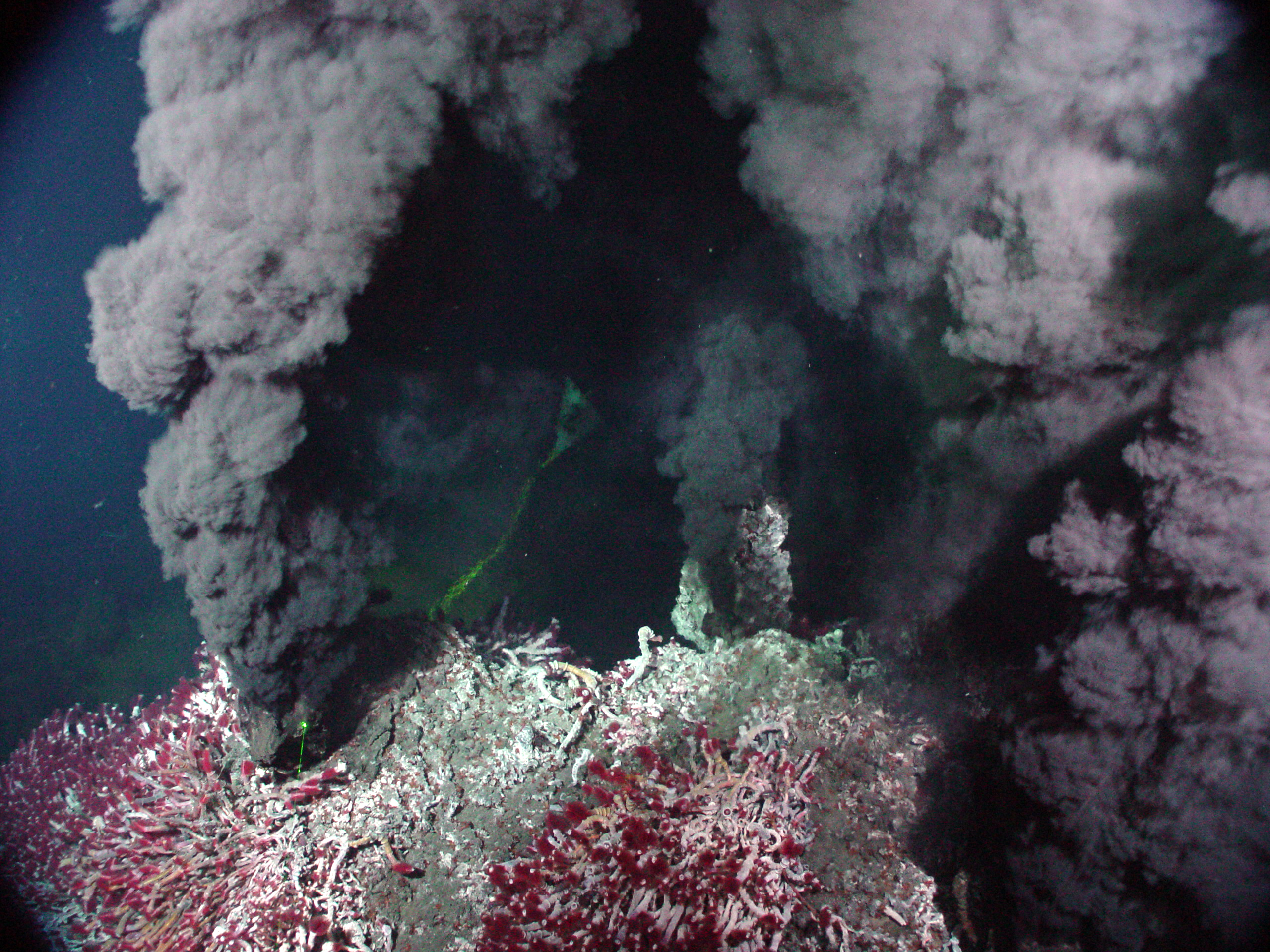 hydrothermal vent bacteria chemosynthesis Hydrothermal vents and chemosynthesis: a habitat in the dark hydrothermal vents are deep, dark locations on the sea floor which release high temperature fluids and chemicals into the ocean water above.
